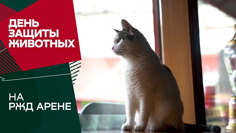 Смолов с котенком, собаки Крыховяка. Бэкстейдж со съемок календаря